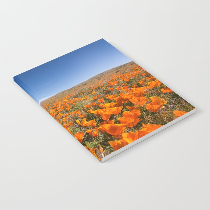 Blooming poppies in Antelope Valley Poppy Reserve Notebook