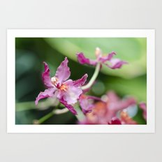 Orchid Beauty (3) Art Print