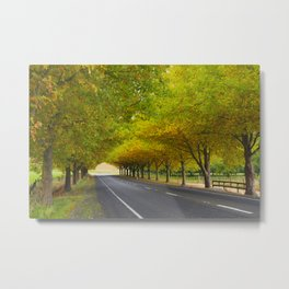 Tunnel of autumn leaves Havelock North Hawkes Bay Metal Print