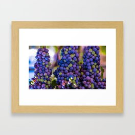 Bunches of Grapes  Framed Art Print