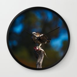 An Osprey Crouched Over Its Catch Wall Clock