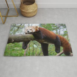 Extremely Cute Little Red Panda Sleeping Lenghtways Tree Branch Close Up Ultra HD Rug