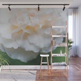Garden Rose - Flower Photography Wall Mural