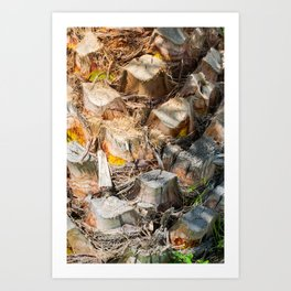 Palm Tree Trunk Art Print