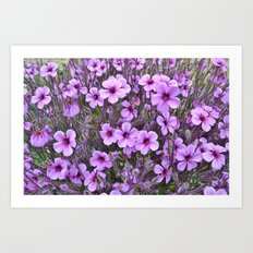 Lilac Pansies Art Print