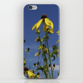 Yellow Coneflower, Ratibida, with azure prairie sky iPhone Skin