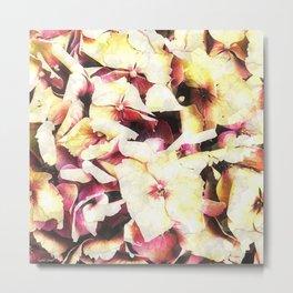 Hortensia - Hydrangea Metal Print