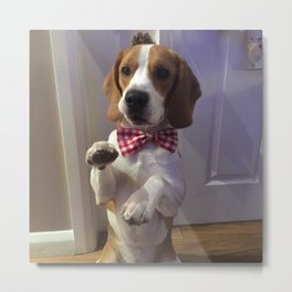 Top Dog !! Metal Print