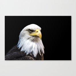 Majestuous Bald Eagle Canvas Print