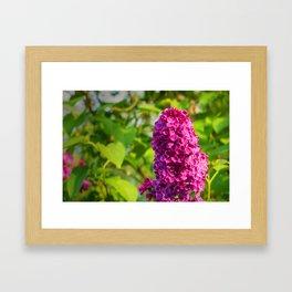 """PANTONE Rhodamine Red C"" Lilac Framed Art Print"