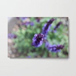 Purple Salvia Metal Print