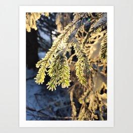 Good morning snowy sunshine Art Print