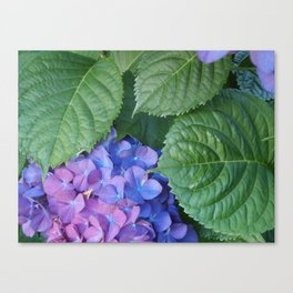 Hydrangea and Leaves Canvas Print