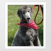 poodle Art Prints featuring Poodle by Sboss01