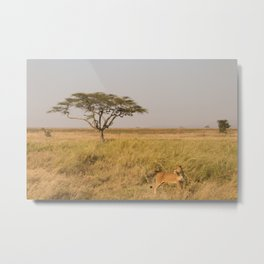 Lioness of the Serengeti Metal Print