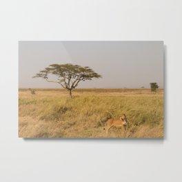 Lioness of the Serengeti Metal Print