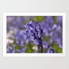 In Among the Bluebells Art Print