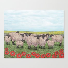 Suffolk sheep in a field with poppies Canvas Print