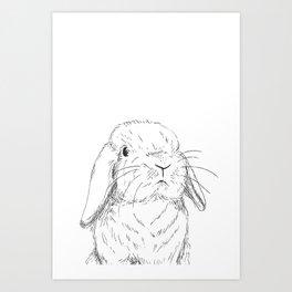 Curious Holland Lop Bunny Art Print