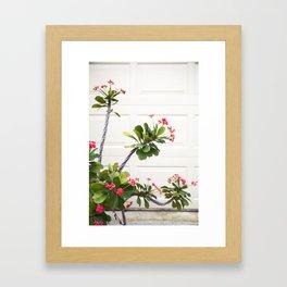 Blooming Crown of Thorns Framed Art Print