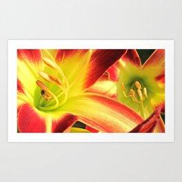 Lily Bee Art Print