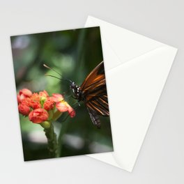 Blood-Orange Butterfly Stationery Cards