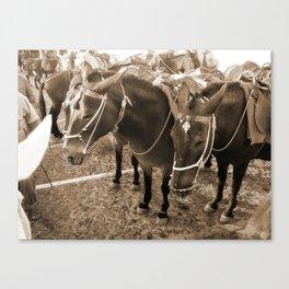 Donkeys in Santorini Canvas Print