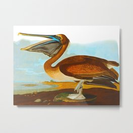 Brown Pelican John James Audubon Vintage Scientific Birds Of America Illustration Metal Print