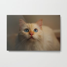 Giuseppe the Cat Metal Print