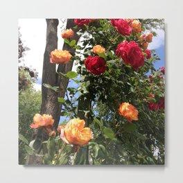 Jardin des plantes I, Toulouse, france Metal Print