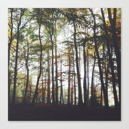Autumn Forest Trees Canvas Print