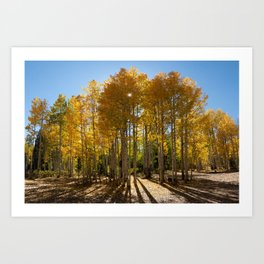 Autumn Blaze outside of Crested Butte, Colorado for #Society6 Art Print