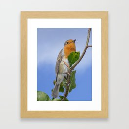 Robin Red Breast Framed Art Print