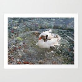 Duck Splashing Water Creating Ripples on Riverbank Art Print