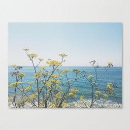 pacific I Canvas Print