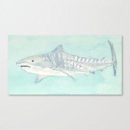 tiger shark Canvas Print