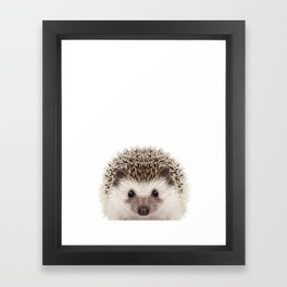 Baby Hedgehog Framed Art Print