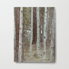 A Walk Through The Aspen Metal Print