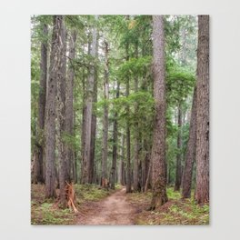 Forest Trail, Pacific Northwest, Washington State Canvas Print