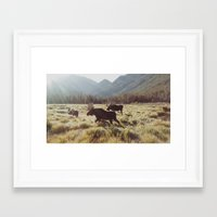 sunrise Framed Art Prints featuring Three Meadow Moose by Kevin Russ