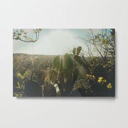 Mt Bonnell Cactus Metal Print