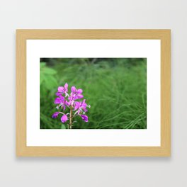Fireweed Wildflower Framed Art Print