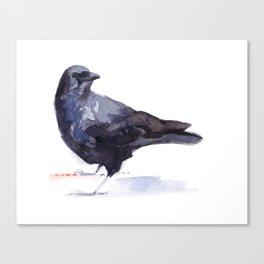 Crow #3 Canvas Print
