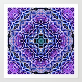 Echeveria Bliss Three Art Print