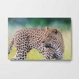 Leopard photos Metal Print