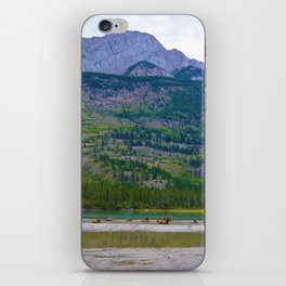 Bull Elk with his Lady Friends on the Athabasca River in Jasper National Park, Canada iPhone Skin