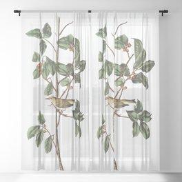 Tennessee warbler, Birds of America, Audubon Plate 154 Sheer Curtain