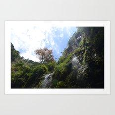 Panamian nature Art Print