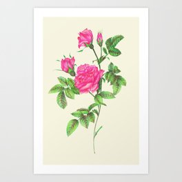 Ballpoint Pen, Redouté's Roses Art Print