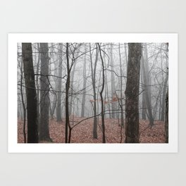 Woods on a Foggy Sunday Stroll Art Print